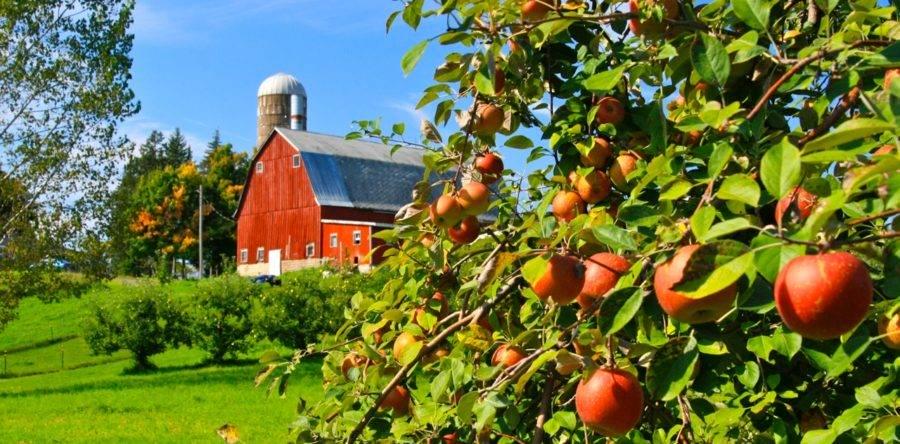 Apple Picking Minnesota